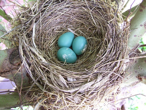 How to Save Money and Build a Nest Egg for the Self-Employed