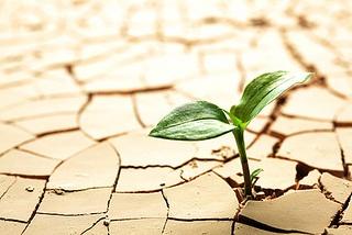 Surviving a Drought